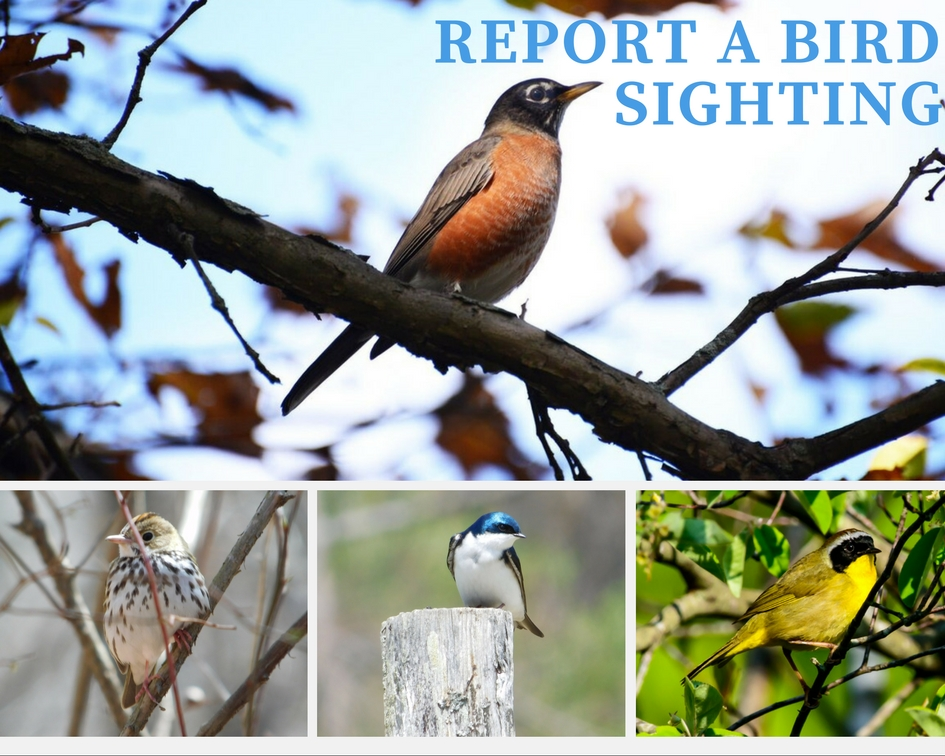 Report a Bird Sighting to Audubon
