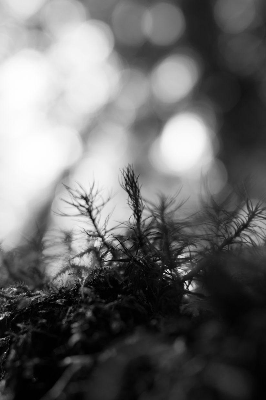 Rainbird 11, Moss from Below