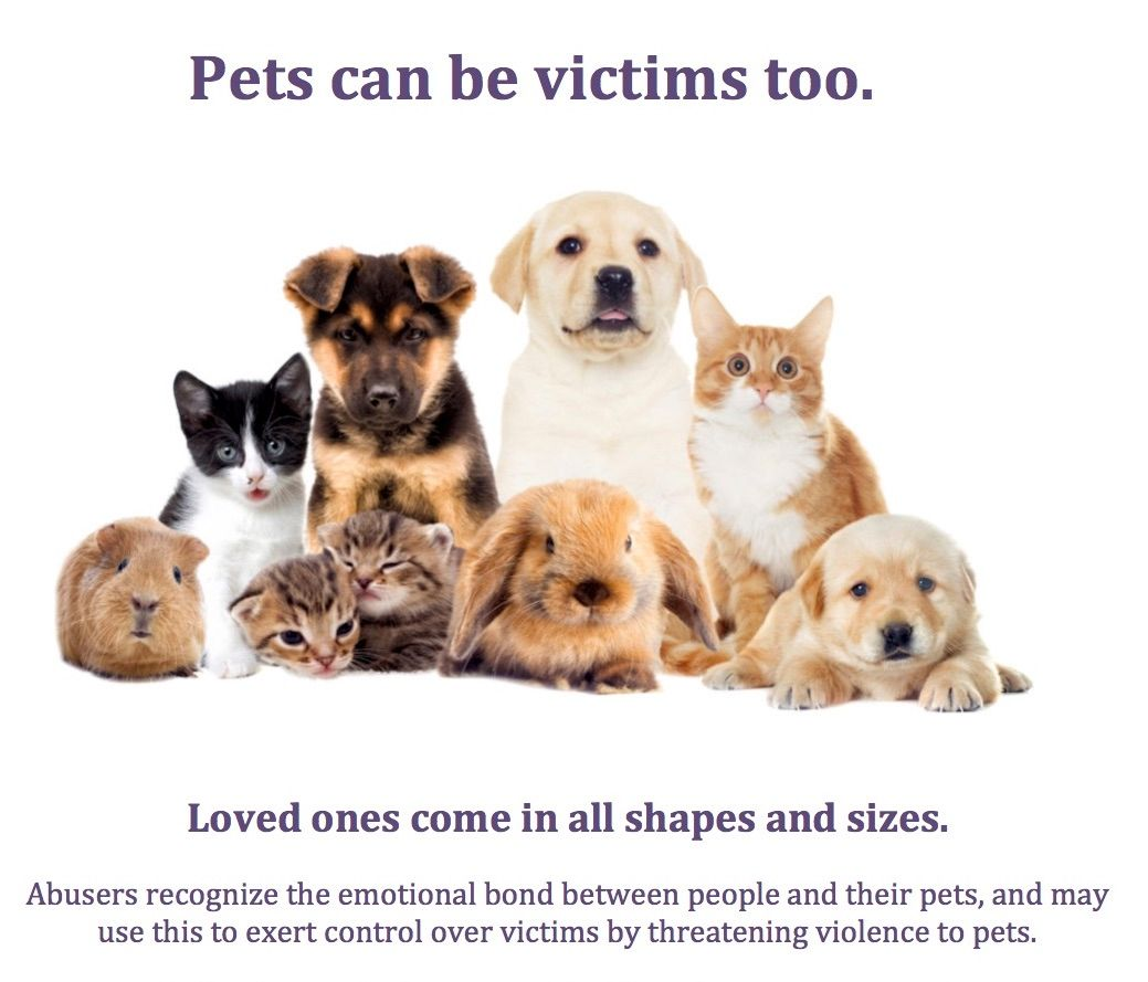 Pets can be victims too
