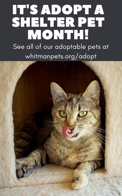 Adopt a Shelter Pet Month!