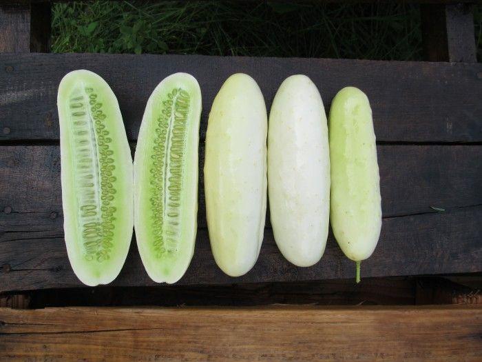 'Silver Slicer' Cucumber