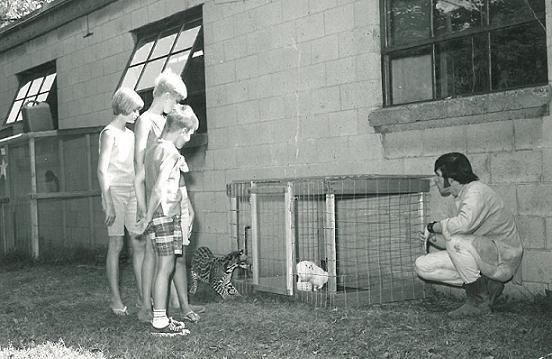 Ocelot, Rabit (1968)