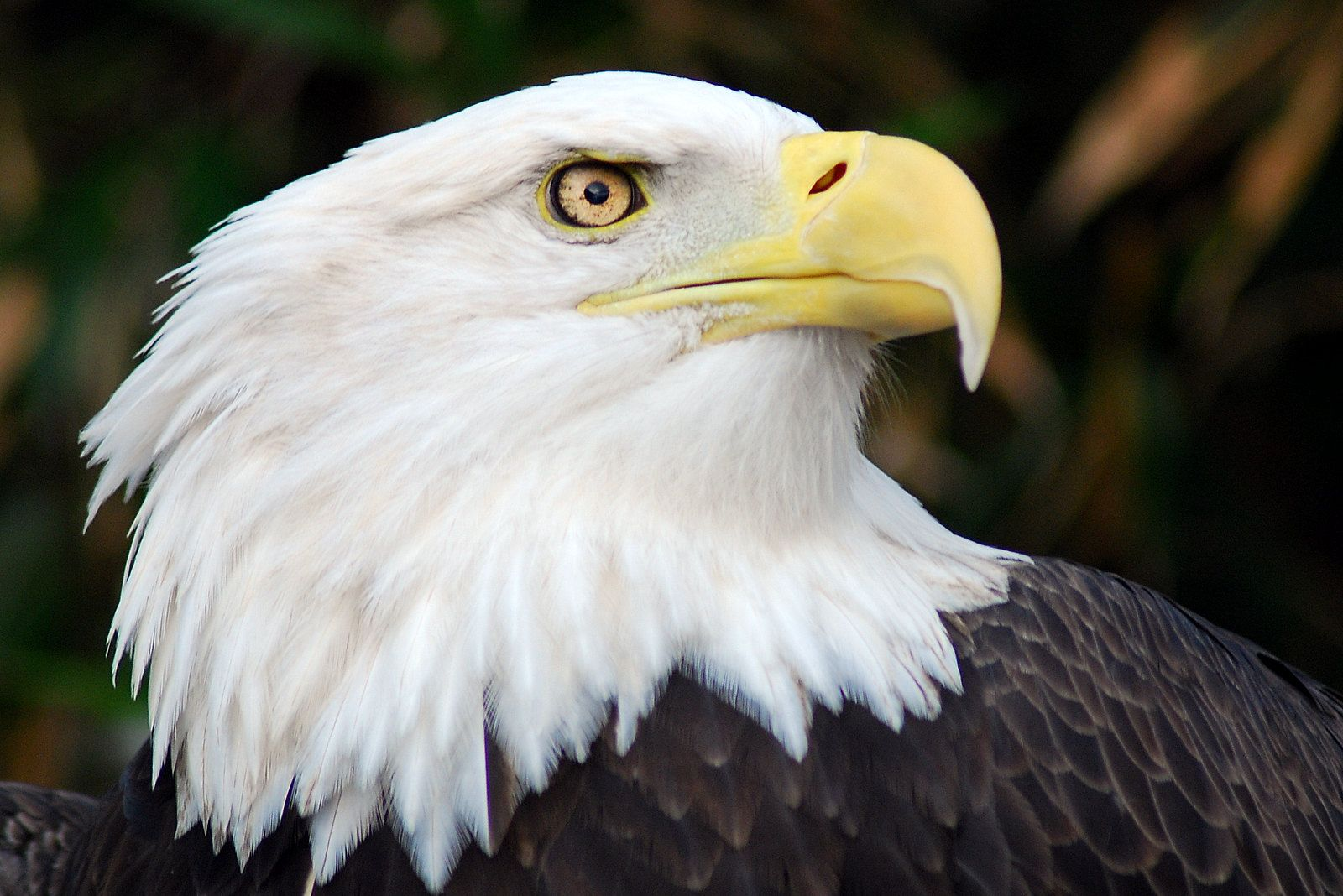Endangered Species Day: In Celebration of the Endangered Species Act