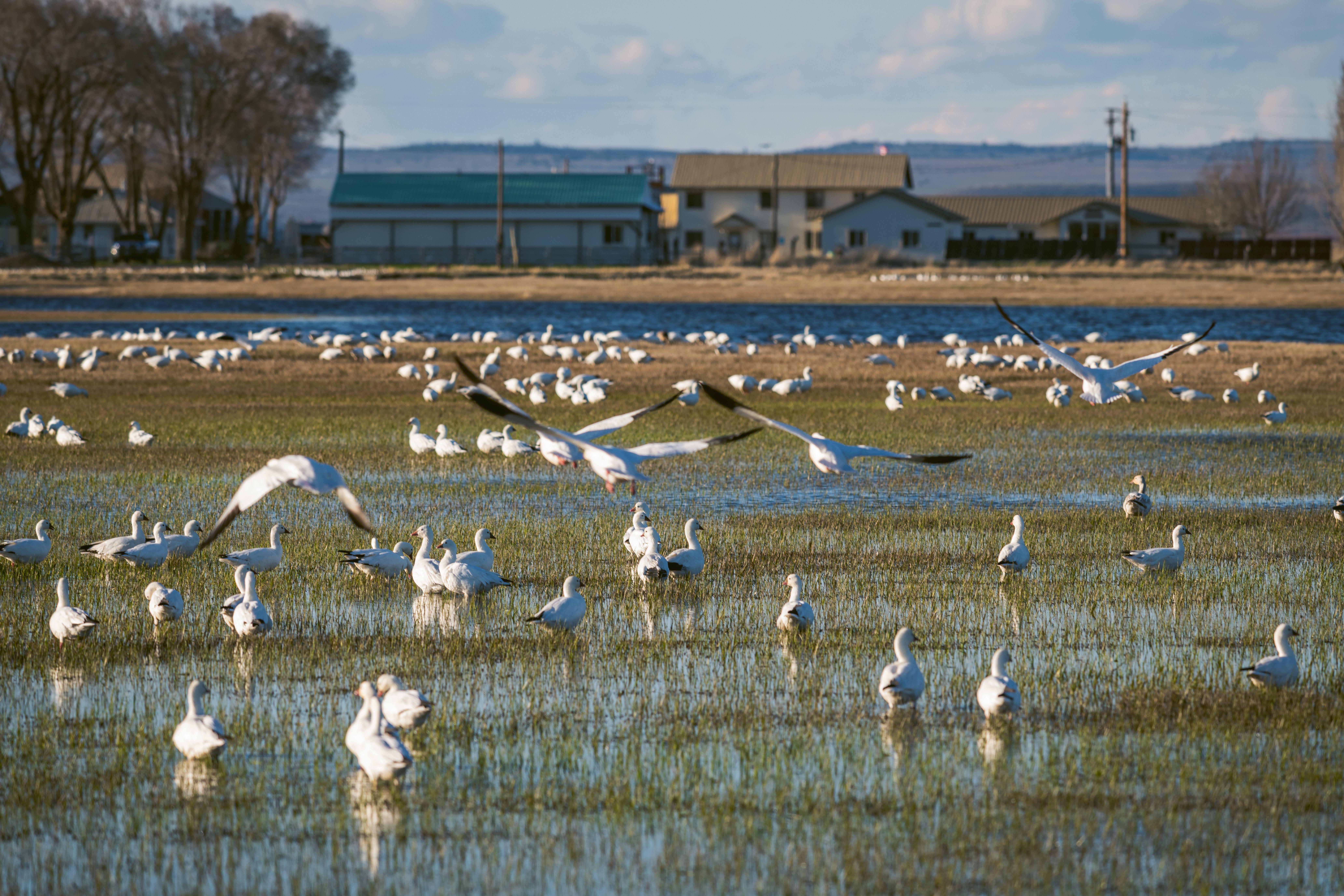 Harney County VIRTUAL Migratory Bird Festival