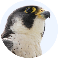 Party for the Peregrines+