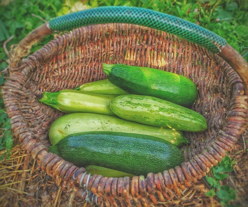 Zucchini Recipes by Chef Duskie Estes + Chef Don Nolan