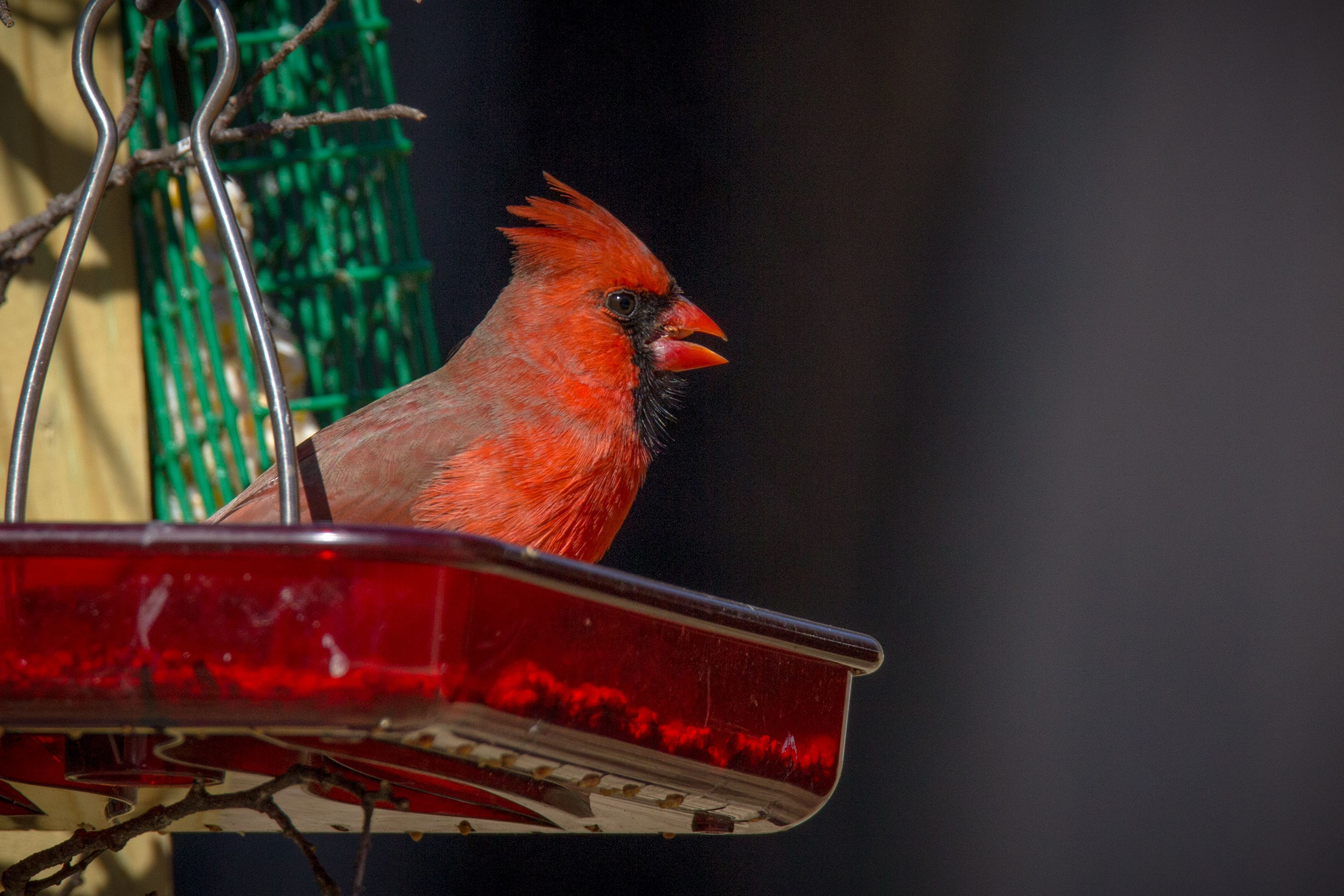 Clean Feeders Provide Impeccable Protection to Keep Birds Healthy