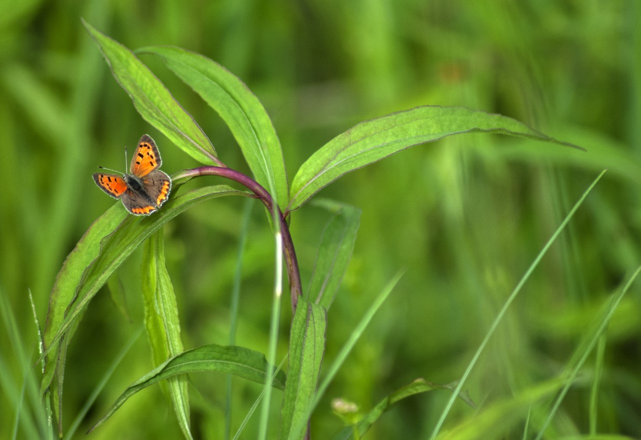 Butterflies and Birds: Photography Exhibit by Rufus Abdullah