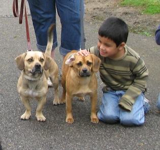 Boy with two dogs