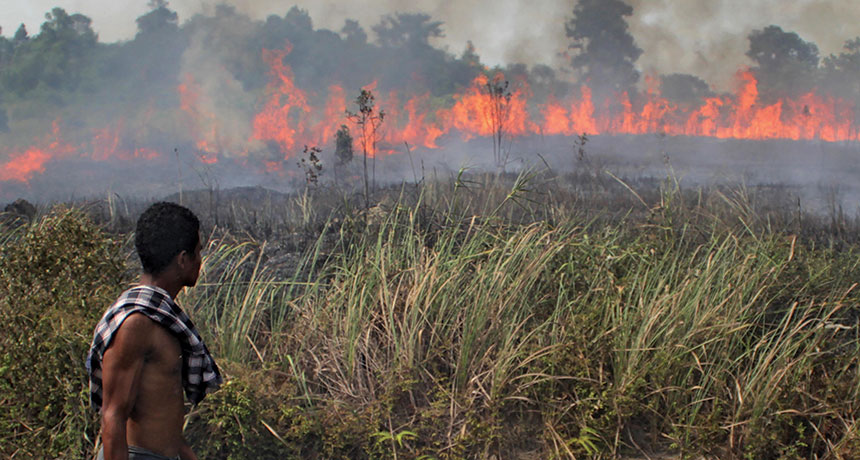When bogs burn, the environment takes a hit