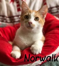 Norwalk 20319
