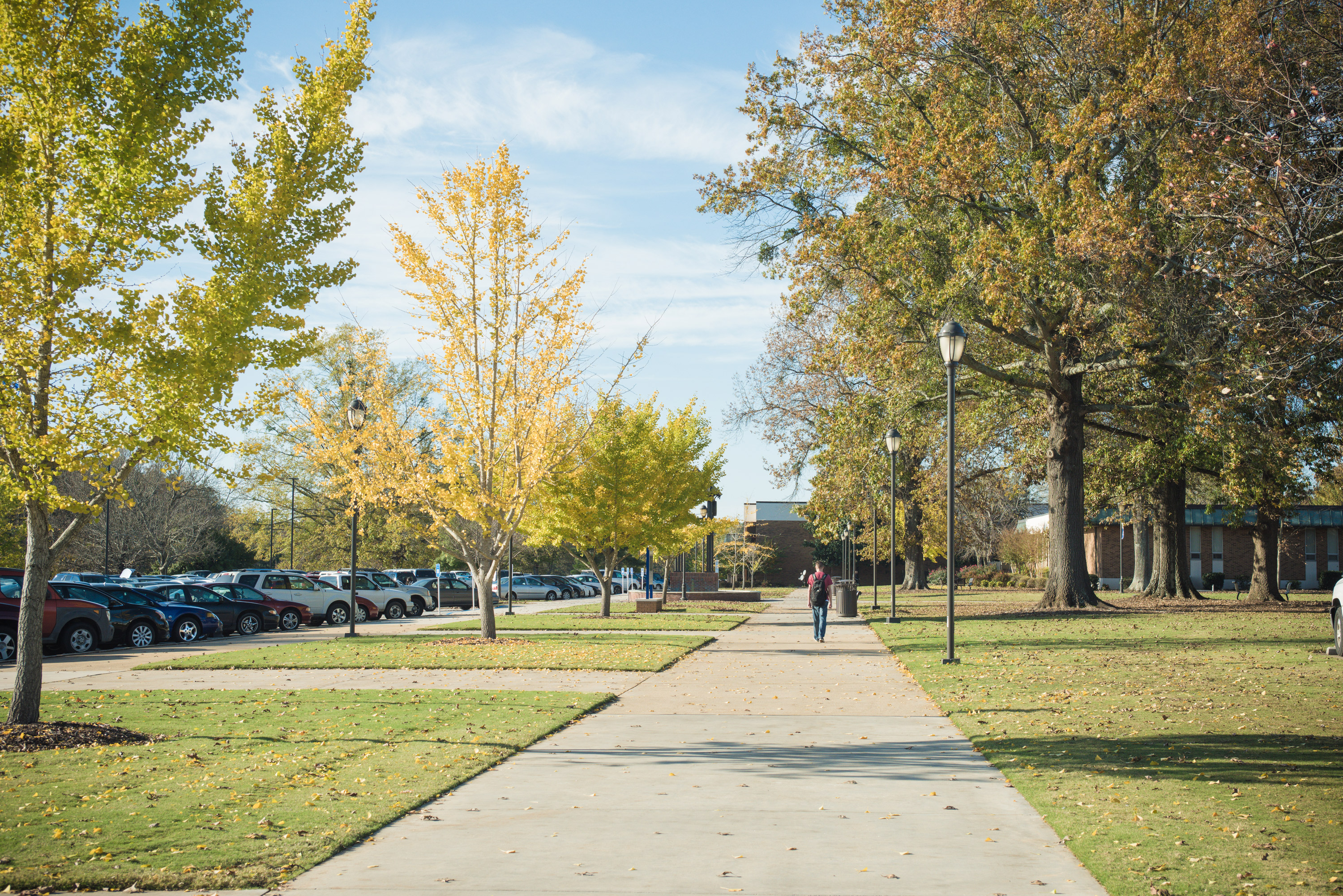 Do you take care of trees on a campus?