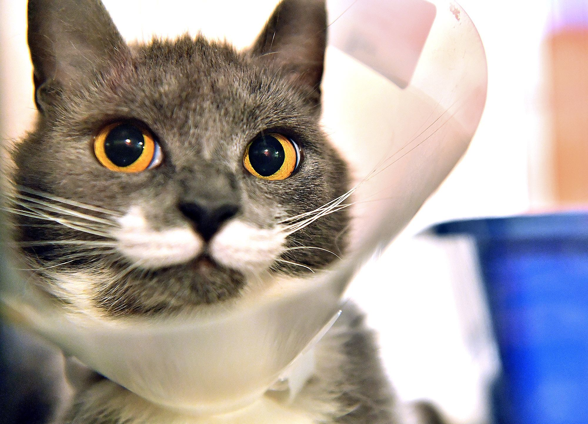 Benefits of Spay and Neuter in Cats and Dogs