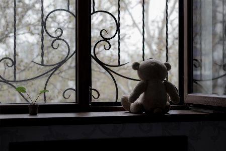 Trauma Statistics_Teddy Bear Looking Out Window