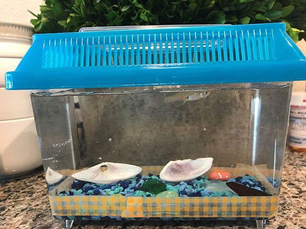 Camp Fish Story
