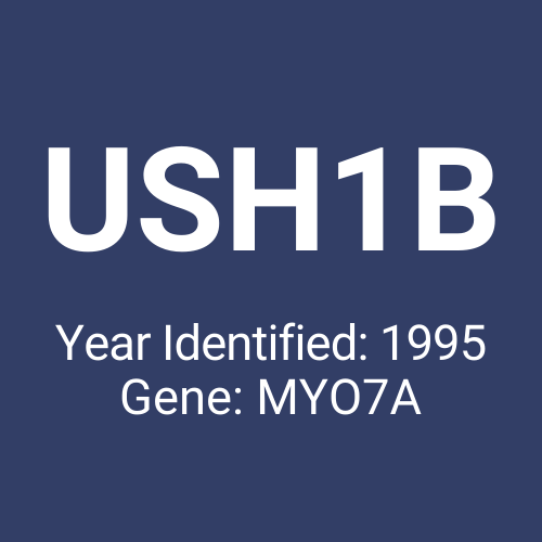 USH1B (Year Identified: 1995 | Gene: MYO7A)