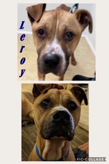 Leroy - ADOPTED