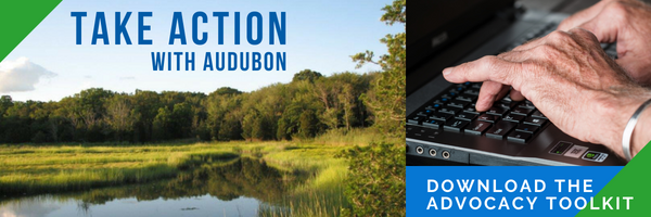 Take Action with Audubon Society of Rhode Island Advocacy Toolkit