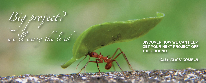 Ant 2016