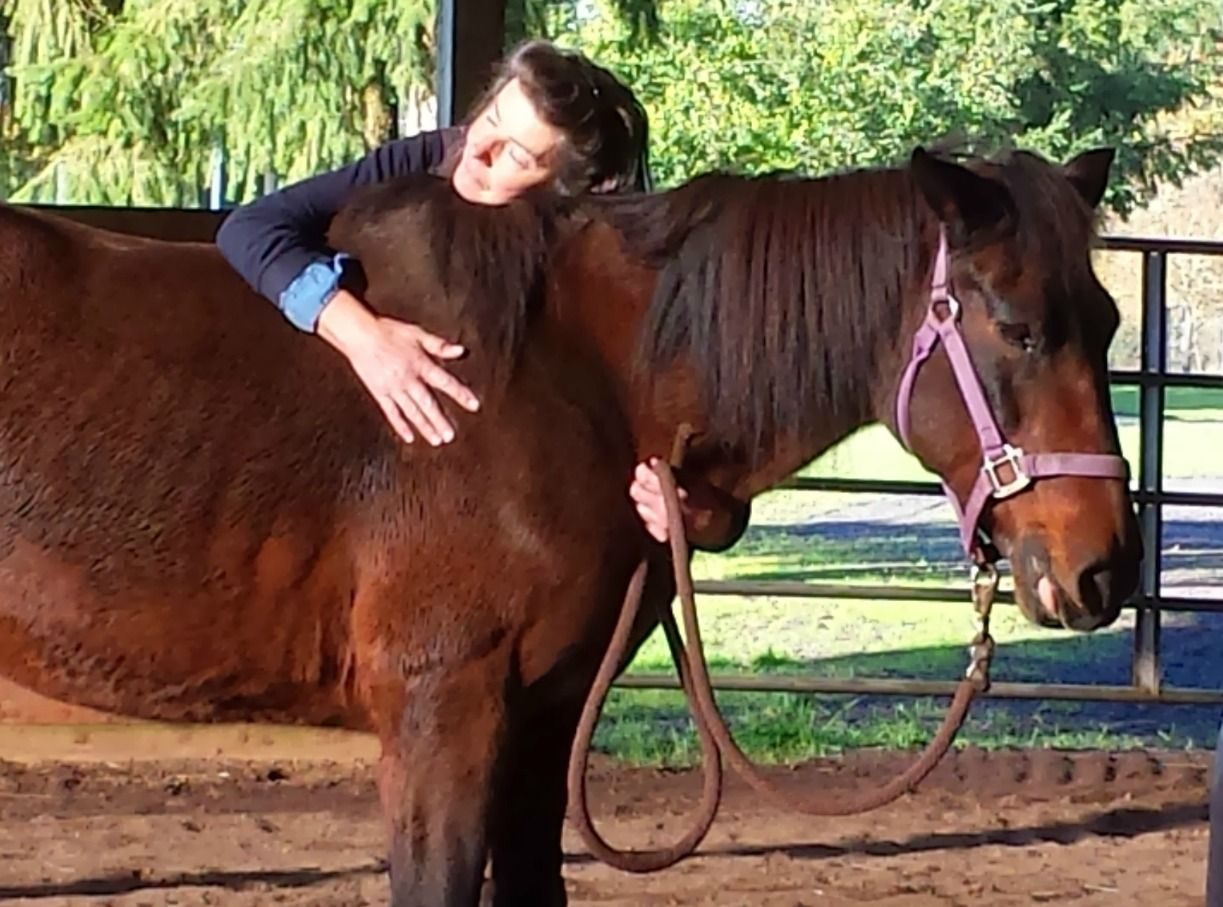 Horses that heal: how equine therapy is helping people find peace of mind