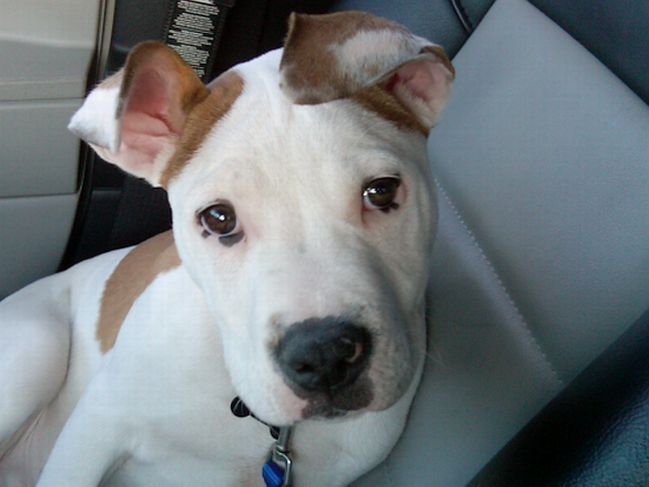 Otis (Wilson)