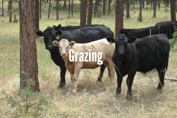 Regarding Grazing