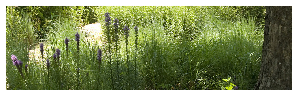 Adkins Arboretum Native Landscape Design Center Fascinating Professional Garden Design Software Style