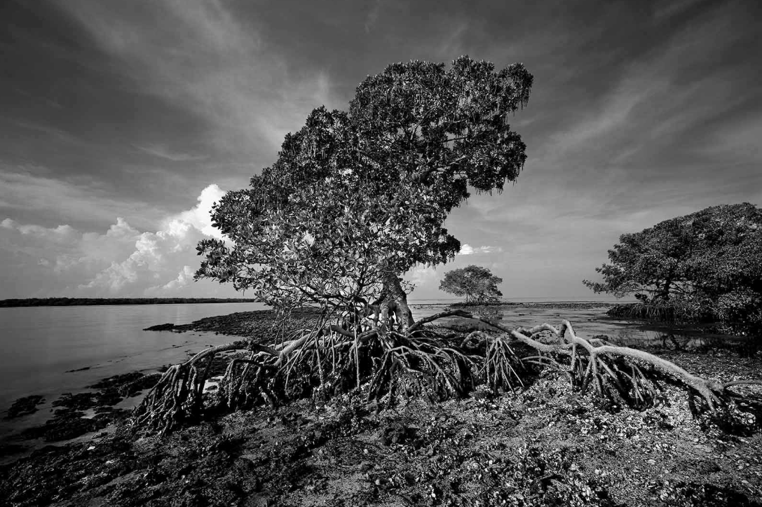 Clyde Butcher: America's Everglades