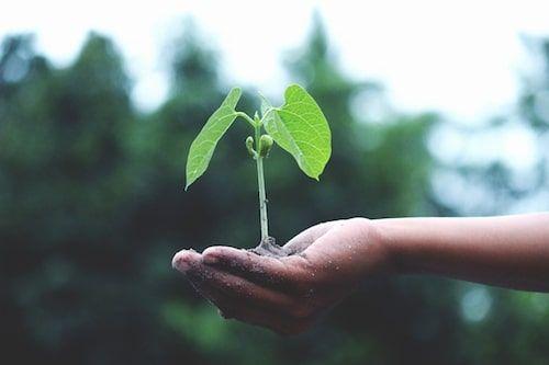 Conservation Mini-Grants