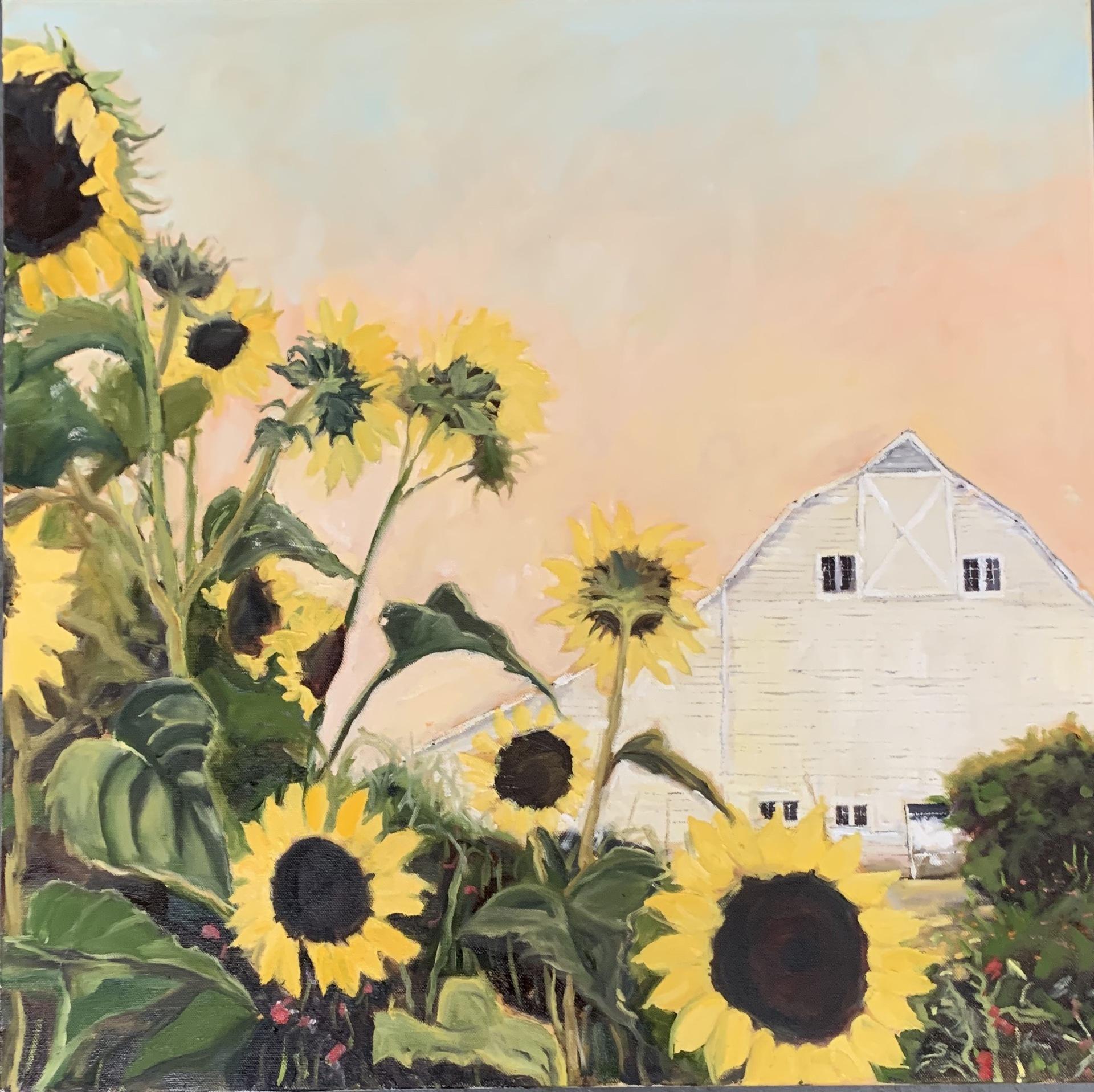 Sunflowers and Luscher Barn