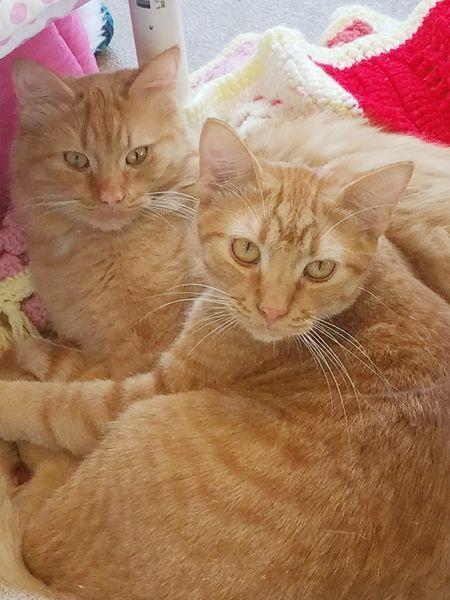 Heathcliff & Meredith