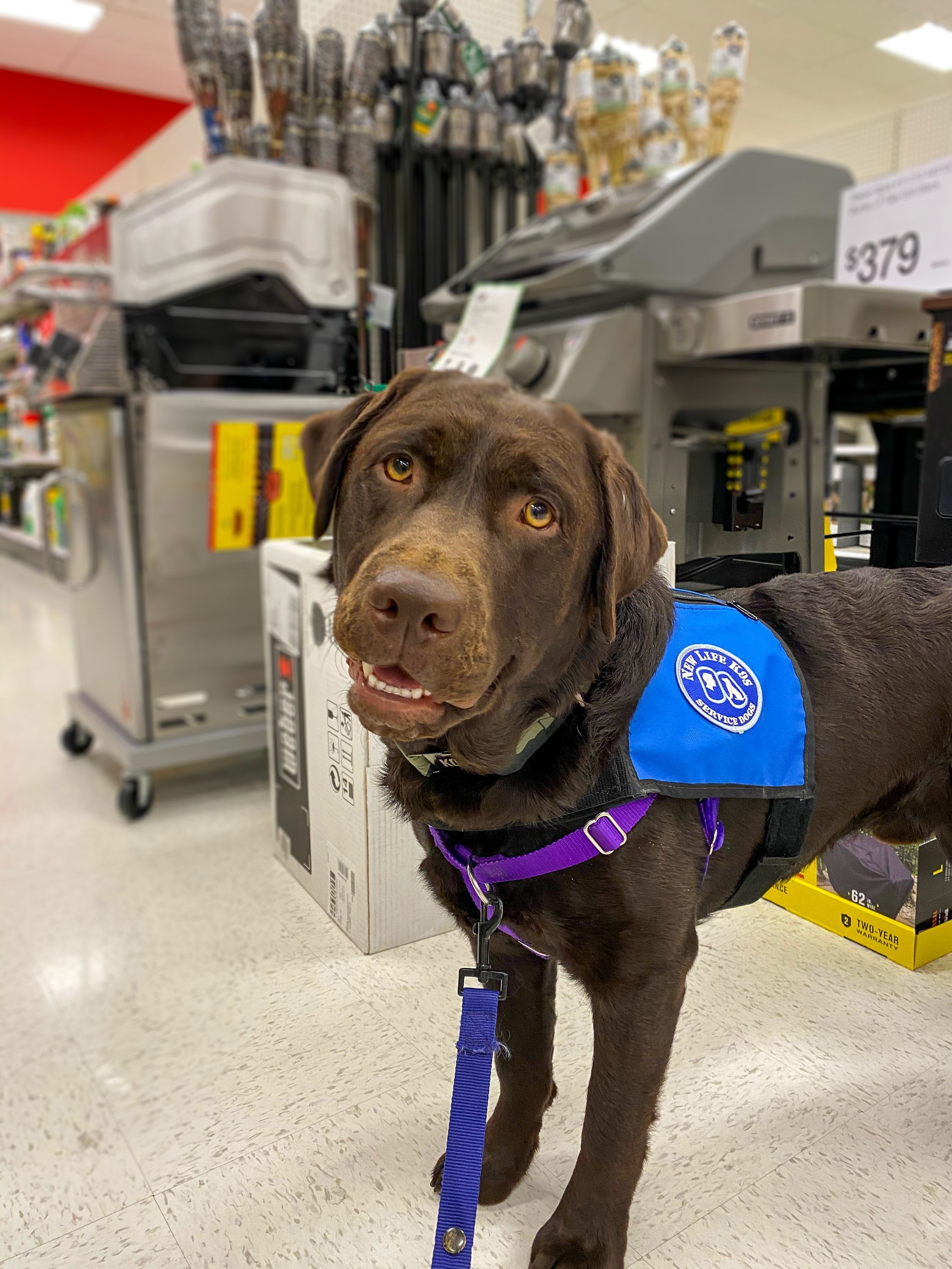 The Importance of Keeping Your Service Dog Well-Groomed & Presentable