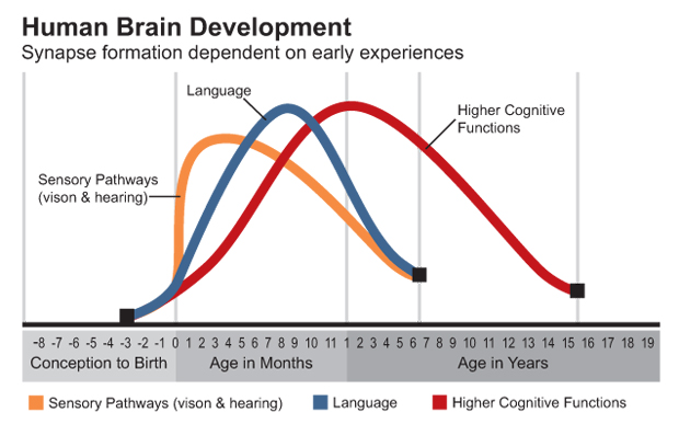 childs brain development happens before they start kindergarten experiences and interactions during these first five years when the brain is most