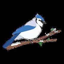Blue Jay Sponsor