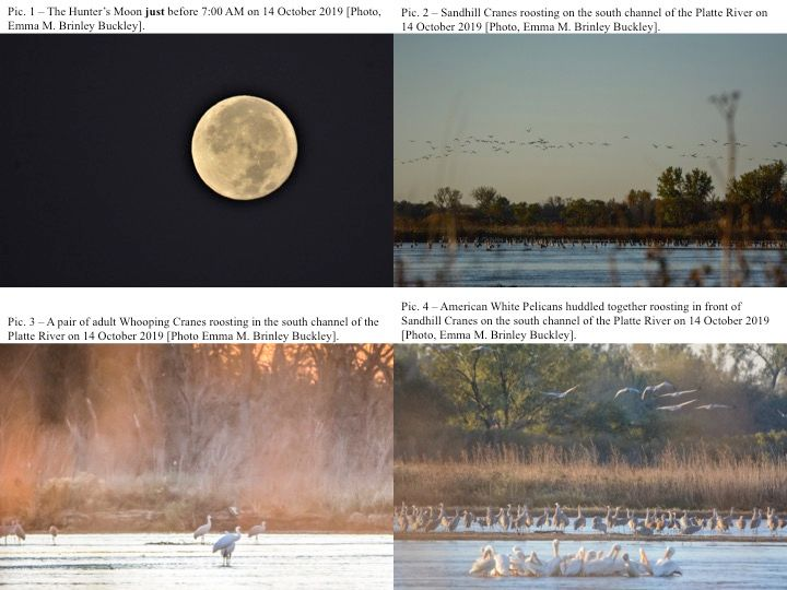 Fall Crane Migration Notes