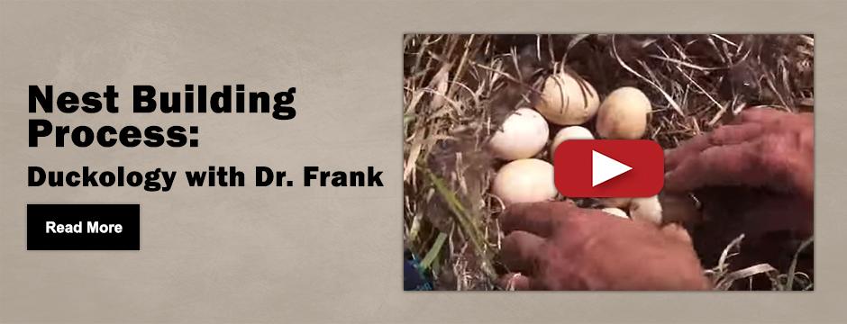 Nest Building 4-27-16