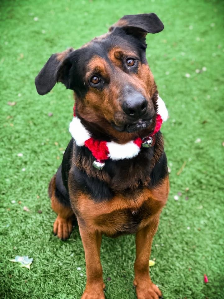 RBARI's Annual Santa Paws Pet Pics!