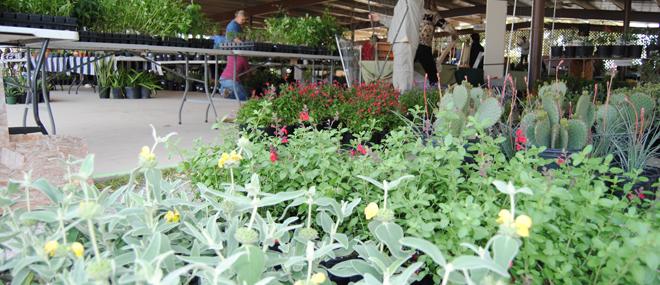Cibolo Nature Center Experience The Cibolo Events Plant Sale