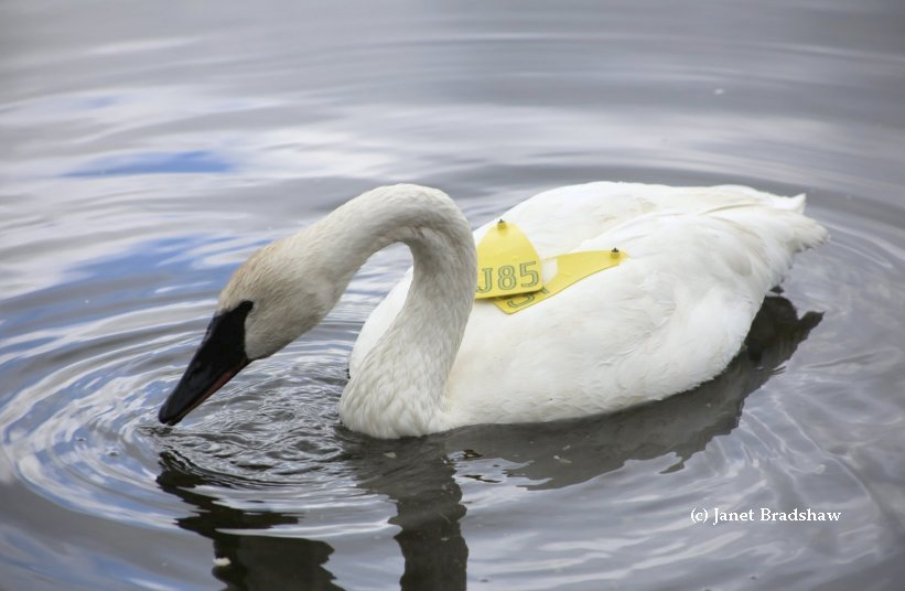 Check out our Swan Links by Province