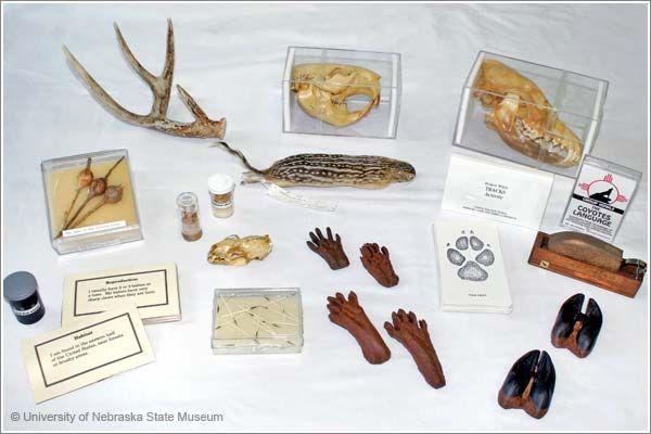 Museum Kits