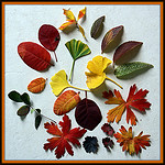 Collect Leaves and other Fall Treasures