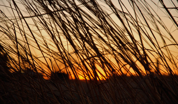 Prairie Sunsets