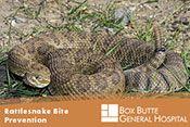 Rattlesnake Bite Prevention