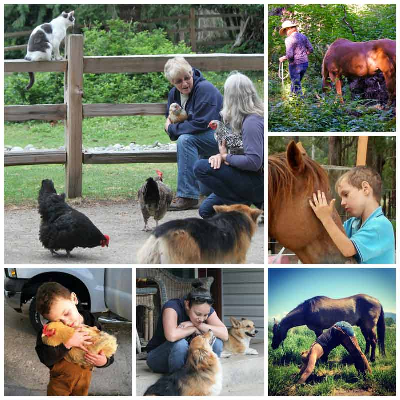 Animal Assisted Services