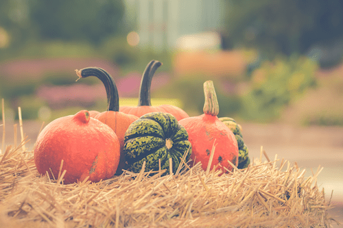 5 Fun Ways to Give Back in Fall