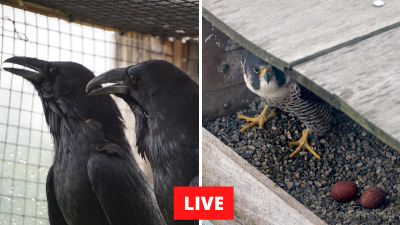 Audubon LIVE Bird Cams
