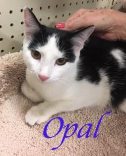 Opal adopted 21719