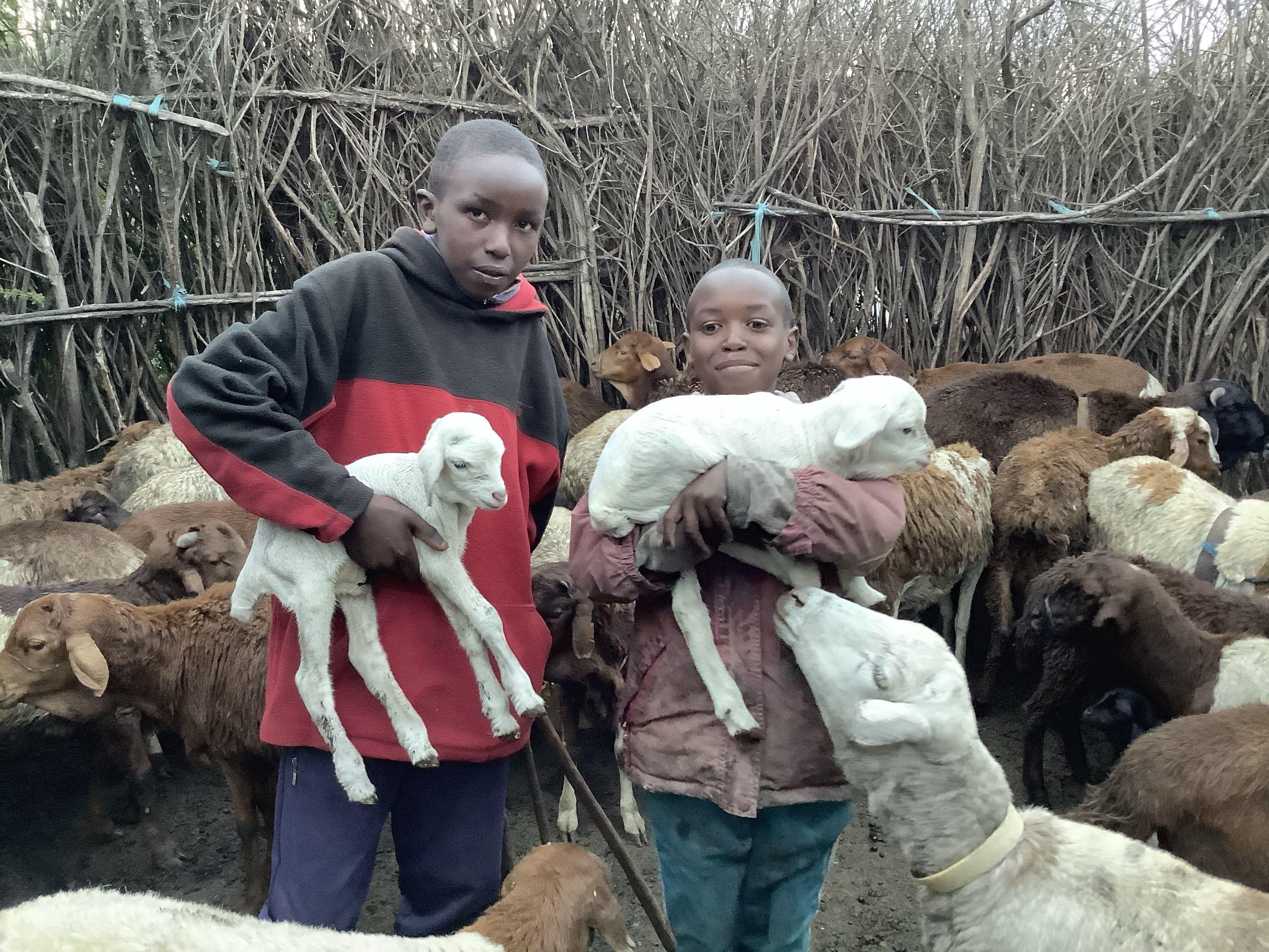 Masai Goats & Sheep