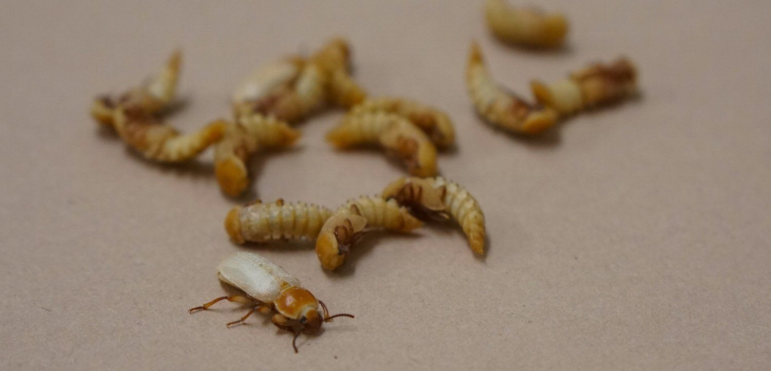 Red Barn Event: Beta Hatch - Insect Entrepreneurs