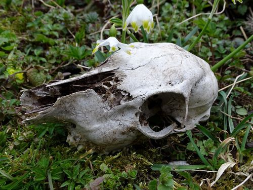 The World of Animal Skulls & Bones